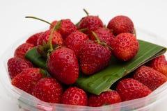 Fresas rojas en la placa blanca en el fondo blanco imagen de archivo libre de regalías