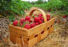 Fresas rojas en una cesta de madera Fotografía de archivo