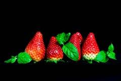 Fresas rojas frescas aisladas en fondo negro Foto de archivo libre de regalías