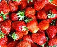 Fresas rojas maduras Imágenes de archivo libres de regalías