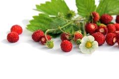 Fresas salvajes Fotografía de archivo