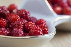 Fresas salvajes foto de archivo libre de regalías