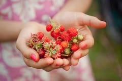 Fresas salvajes a disposición fotografía de archivo