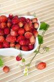Fresas salvajes en un pequeño cuenco Fotografía de archivo libre de regalías