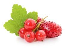Fresas y pasas rojas imagen de archivo libre de regalías