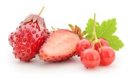 Fresas y pasas rojas imágenes de archivo libres de regalías