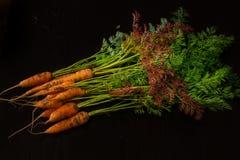 Fresche, agricoltore, le giovani carote con belle cime sul nero hanno dipinto il fondo di legno Fotografia Stock Libera da Diritti
