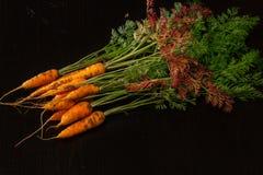Fresche, agricoltore, le giovani carote con belle cime sul nero hanno dipinto il fondo di legno Fotografia Stock