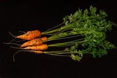 Fresche, agricoltore, le giovani carote con belle cime sul nero hanno dipinto il fondo di legno Fotografie Stock