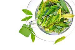 Freschezza del tè verde immagini stock