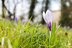 Freschezza di aprile della primavera Fotografia Stock
