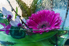 Freschezza, fiori nelle gocce di acqua fotografia stock libera da diritti