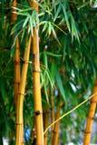 Fresco amarelo de bambu Foto de Stock Royalty Free