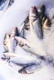 fresco?? archivio del pesce Immagini Stock Libere da Diritti