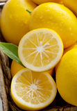 Fresco dall'albero, limoni del Meyer in un cestino Fotografie Stock