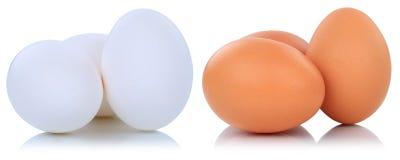 Fresco de Brown e dos ovos brancos isolado Imagens de Stock Royalty Free