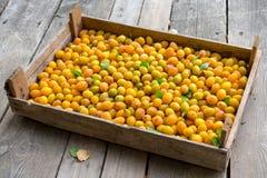 Fresco, natural, grupo de ameixas amarelas rasgadas Junto com as folhas verdes fotografia de stock