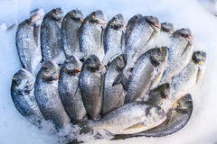 fresco?? peixes Foto de Stock