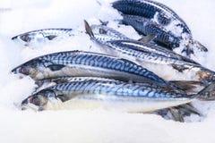 fresco?? peixes foto de stock royalty free