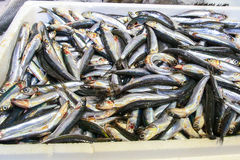 fresco?? peixes fotografia de stock