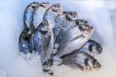 fresco?? peixes Imagens de Stock