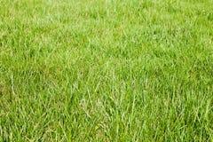 Fresco-resorte-verde-hierba Imagen de archivo