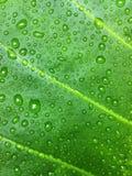 Fresco verde Fotografía de archivo
