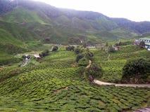 Frescor da plantação de chá do ` s de Tanah Rata, beleza do ` de Cameron Highlands foto de stock