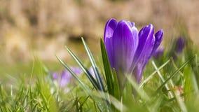 Frescor de abril da mola Imagens de Stock