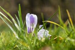 Frescor de abril da mola Foto de Stock Royalty Free