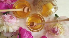 Frescor fresco da flor da pe?nia do mel, bonito vídeos de arquivo
