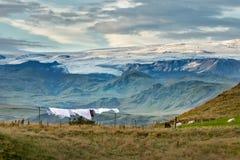 Frescor islandês Imagem de Stock