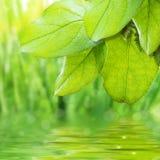 Frescor verde Fotos de Stock Royalty Free
