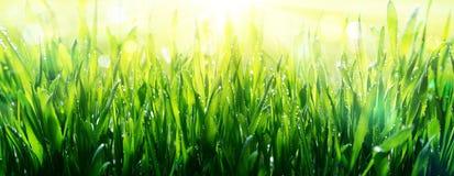 Frescura de la primavera imagen de archivo libre de regalías
