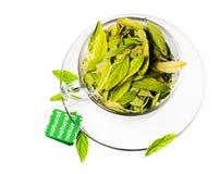 Frescura del té verde foto de archivo