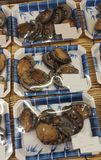 Fresh abalone. At fish market in package Stock Photos