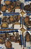 Fresh abalone. At fish market in package Royalty Free Stock Images
