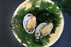 The fresh abalone which I served to a colander. The Japanese abalone is an expensive ingredient characterized by a firm, almost crunchy texture Royalty Free Stock Photos