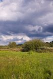 Fresh abandoned natural meadow. Under cloudy sky Royalty Free Stock Images