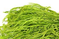 Fresh Acacia - Thai African vegetable Stock Photo