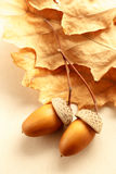 Fresh acorns with dried leaves Stock Photo