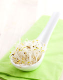 Fresh alfalfa sprouts. On a spoon Royalty Free Stock Image