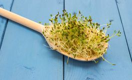 Fresh alfalfa sprouts on a blue board Royalty Free Stock Photos
