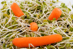 Fresh alfalfa sprouts and carrot Stock Image