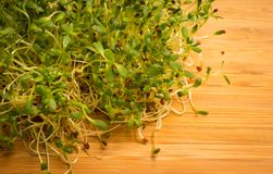 Fresh alfalfa sprouts close up Royalty Free Stock Photos