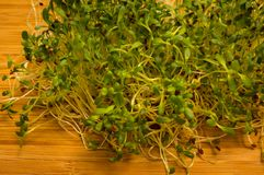 Fresh alfalfa sprouts close up Royalty Free Stock Images