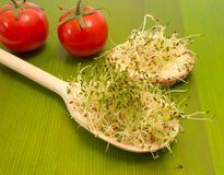 Fresh alfalfa sprouts on a green board Royalty Free Stock Photo