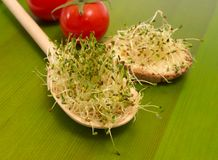 Fresh alfalfa sprouts on a green board Stock Photography