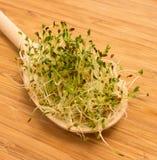 Fresh alfalfa sprouts on a kitchen board Stock Photos