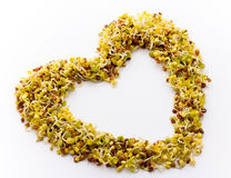 Fresh alfalfa sprouts. Fresh radish sprouts on white background. Heart shape Royalty Free Stock Image